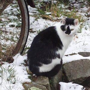 Katzenfoto für personalisierten Schmuck
